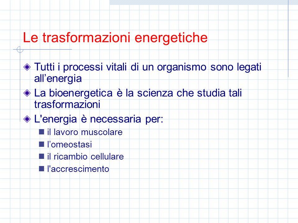 Tutti i processi vitali di un organismo sono legati all'energia