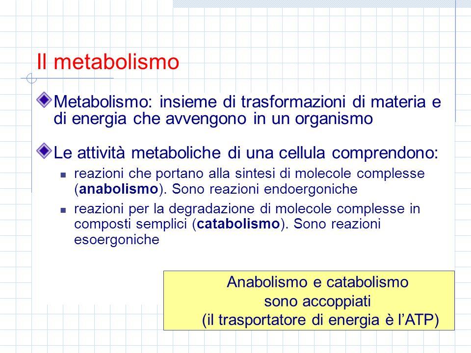 Le attività metaboliche di una cellula comprendono: