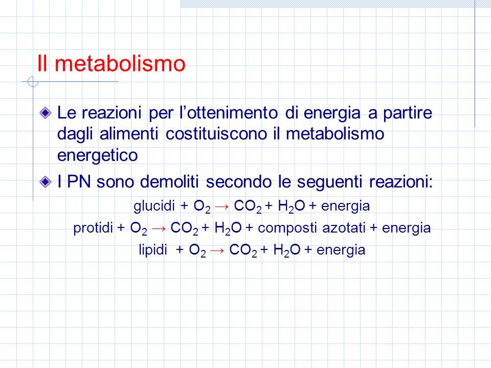 Il metabolismo Le reazioni per l'ottenimento di energia a partire dagli alimenti costituiscono il metabolismo energetico.