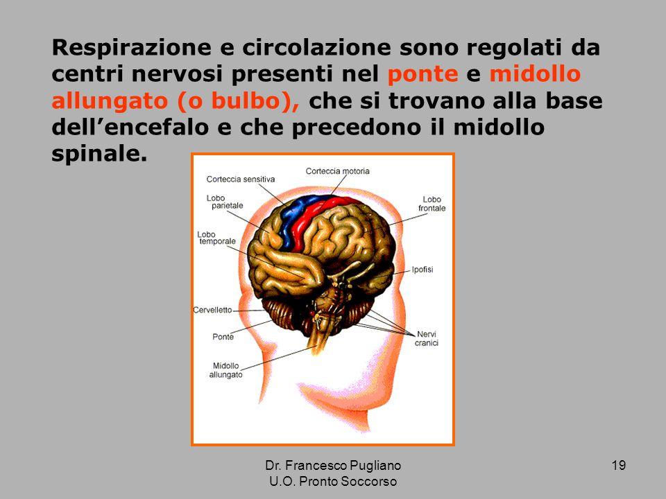 Respirazione e circolazione sono regolati da centri nervosi presenti nel ponte e midollo allungato (o bulbo), che si trovano alla base dell'encefalo e che precedono il midollo spinale.