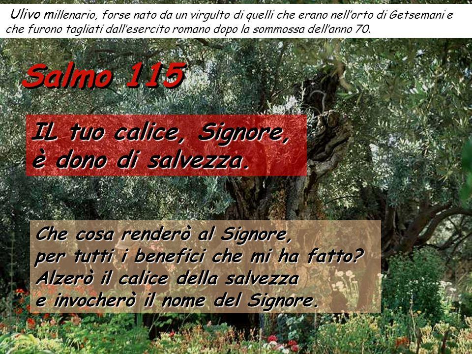 Salmo 115 IL tuo calice, Signore, è dono di salvezza.