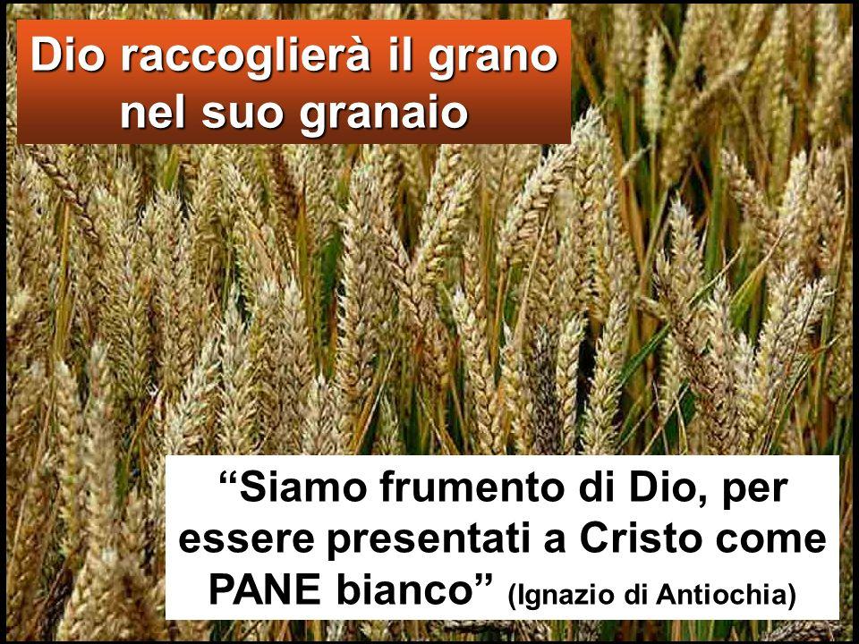 Dio raccoglierà il grano nel suo granaio