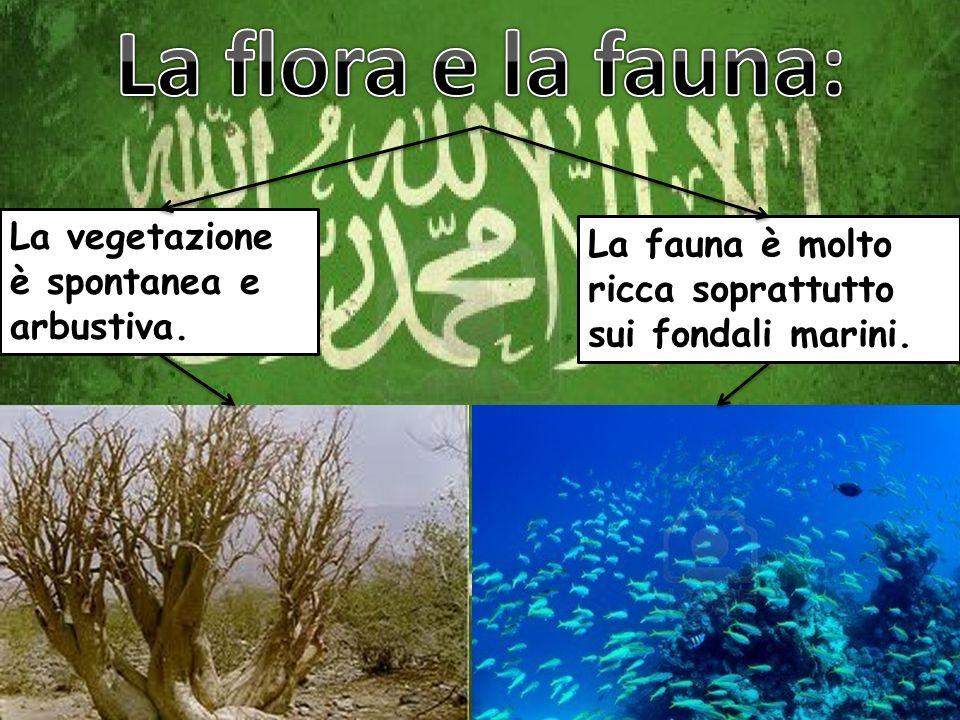 La flora e la fauna: La vegetazione è spontanea e arbustiva.