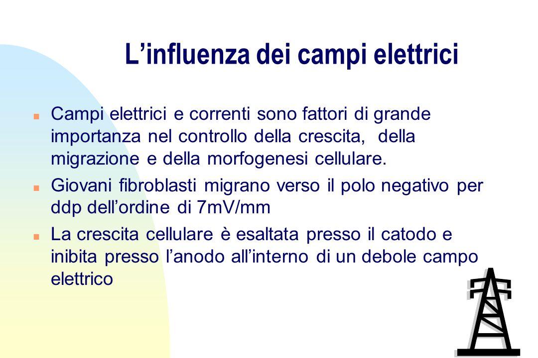 L'influenza dei campi elettrici