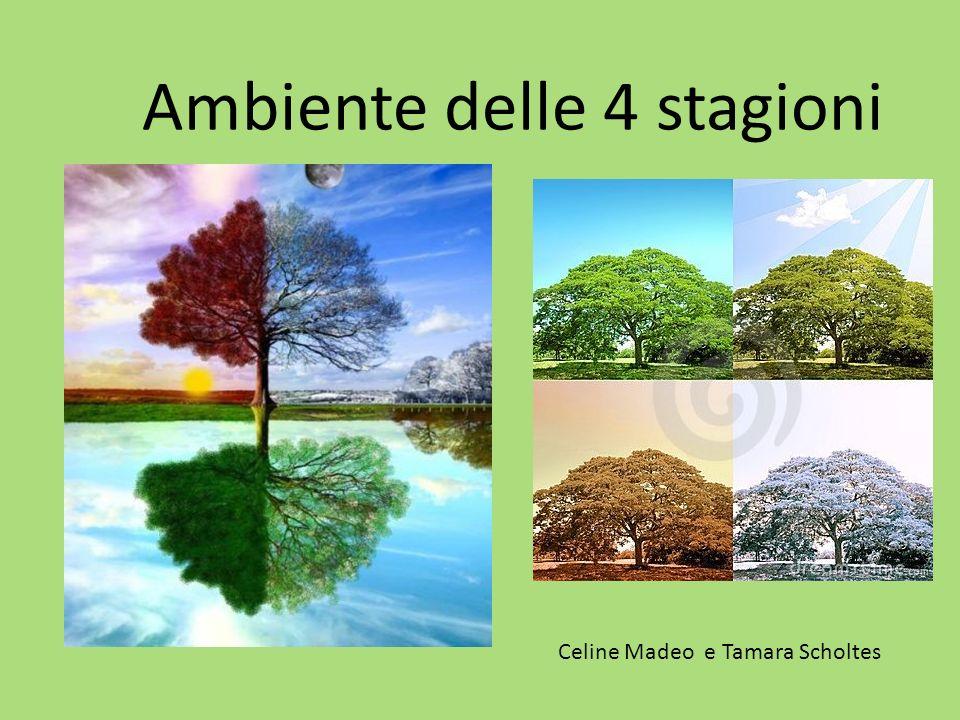 Ambiente delle 4 stagioni