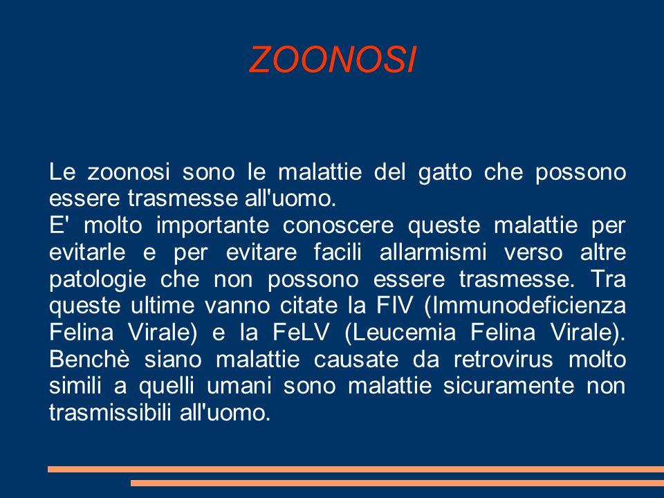 ZOONOSI Le zoonosi sono le malattie del gatto che possono essere trasmesse all uomo.