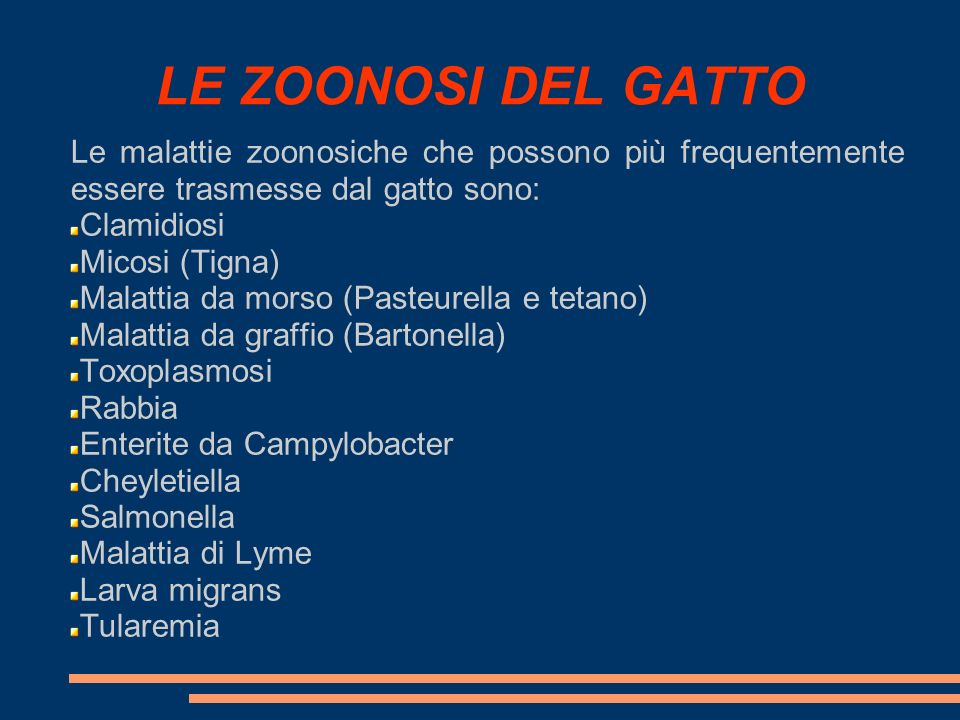 LE ZOONOSI DEL GATTO Le malattie zoonosiche che possono più frequentemente essere trasmesse dal gatto sono:
