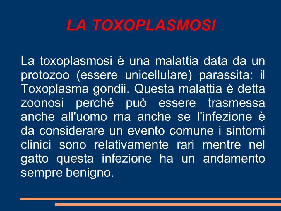 LA TOXOPLASMOSI