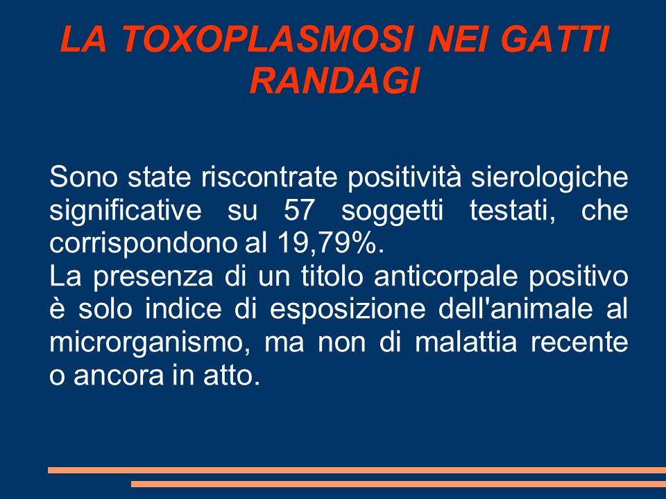LA TOXOPLASMOSI NEI GATTI RANDAGI
