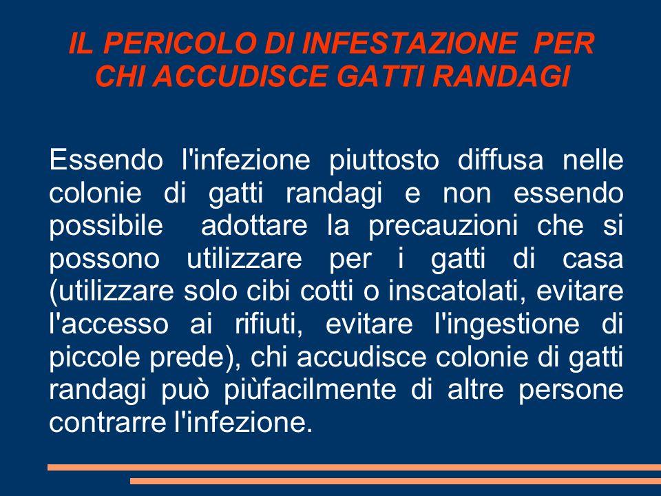 IL PERICOLO DI INFESTAZIONE PER CHI ACCUDISCE GATTI RANDAGI