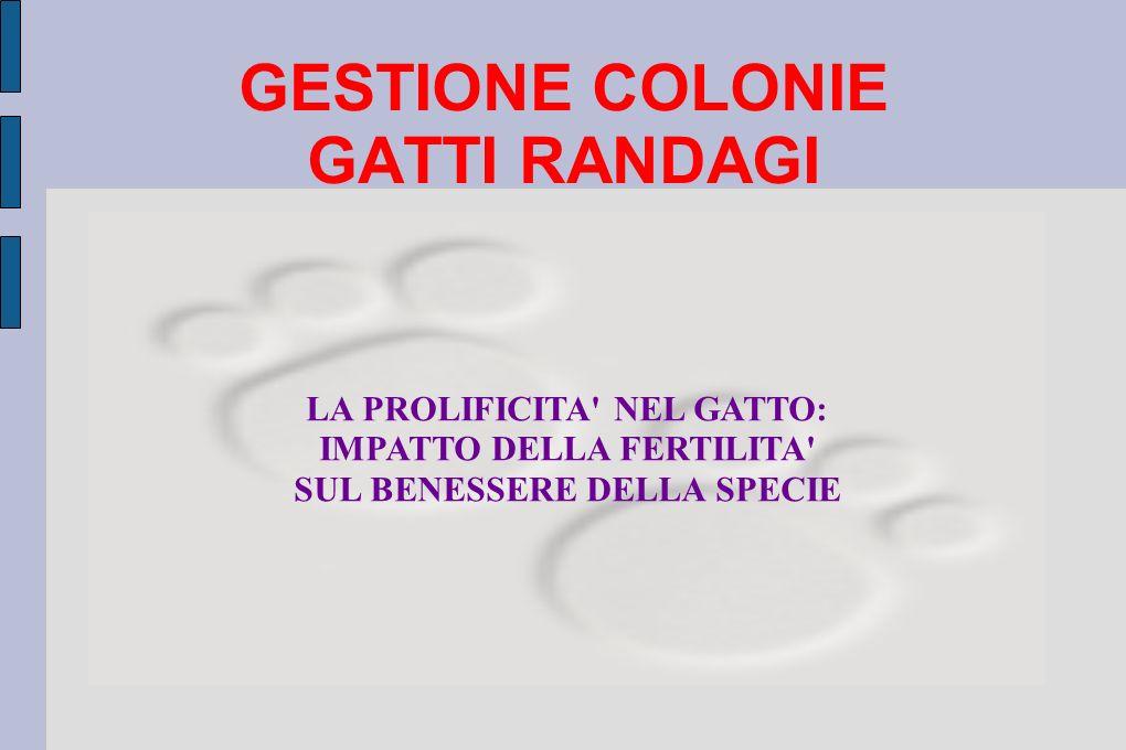 GESTIONE COLONIE GATTI RANDAGI