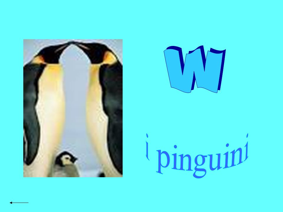 w i pinguini