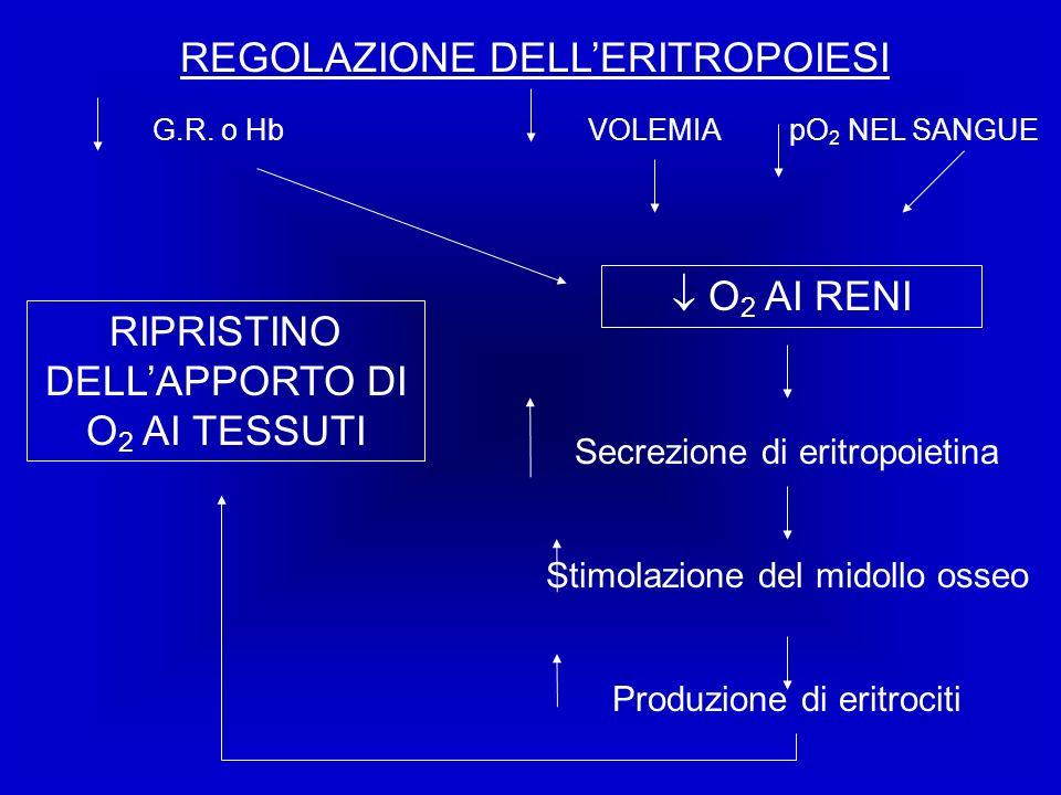 REGOLAZIONE DELL'ERITROPOIESI