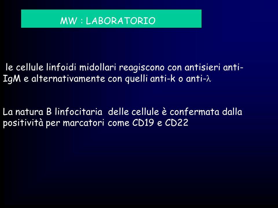 MW : LABORATORIO le cellule linfoidi midollari reagiscono con antisieri anti-IgM e alternativamente con quelli anti-k o anti-