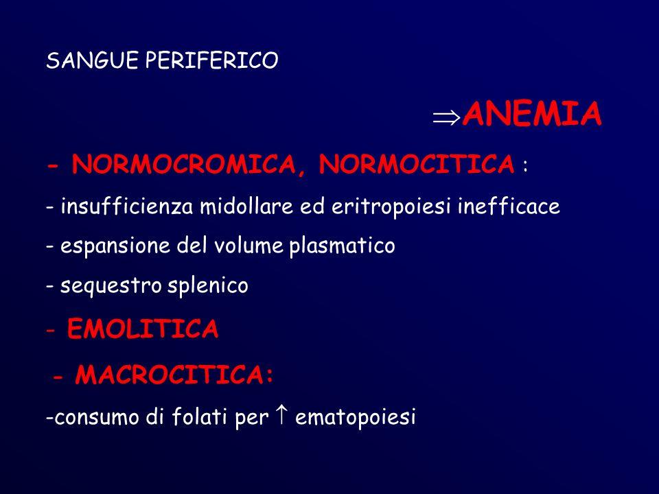 ANEMIA - NORMOCROMICA, NORMOCITICA : EMOLITICA SANGUE PERIFERICO