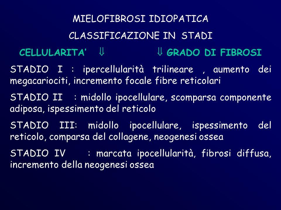 CELLULARITA'   GRADO DI FIBROSI