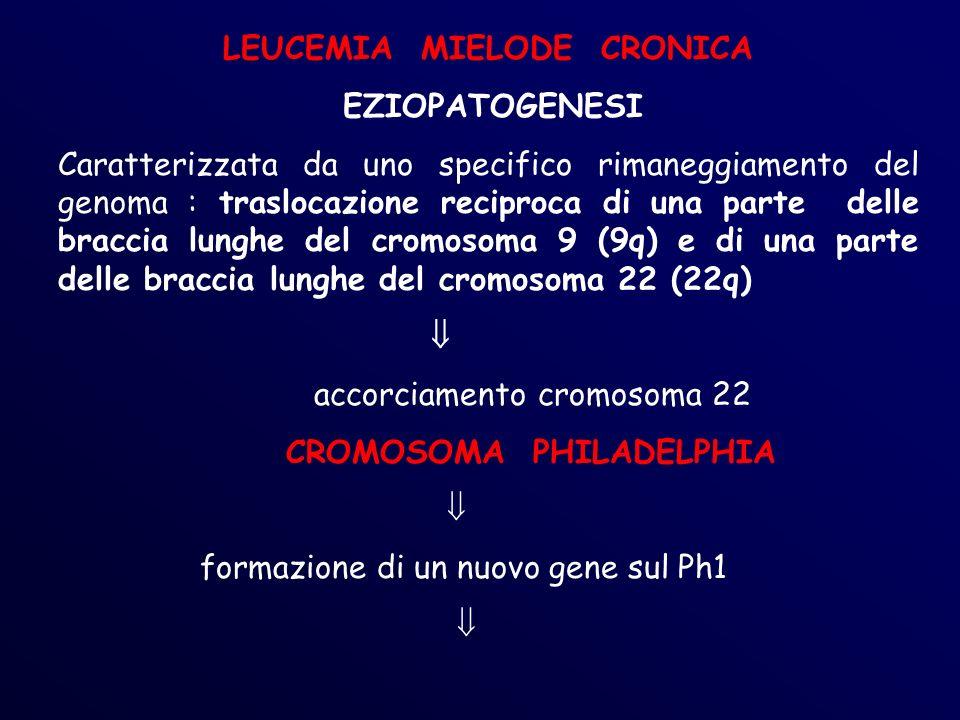 LEUCEMIA MIELODE CRONICA