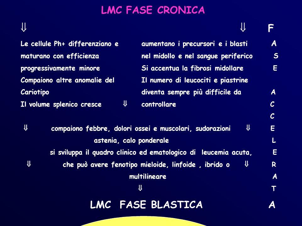 LMC FASE CRONICA   F LMC FASE BLASTICA A