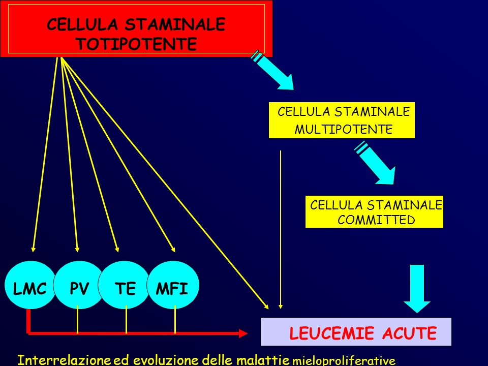 CELLULA STAMINALE TOTIPOTENTE