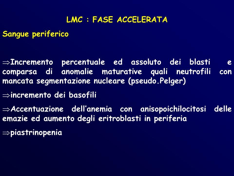 LMC : FASE ACCELERATA Sangue periferico.