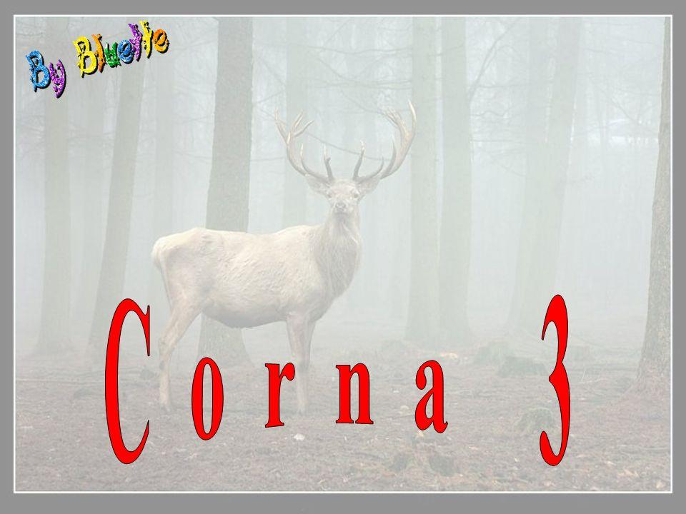 Corna 3