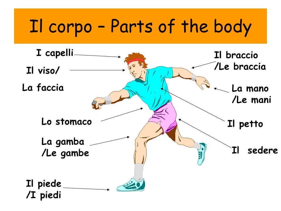 Il corpo – Parts of the body