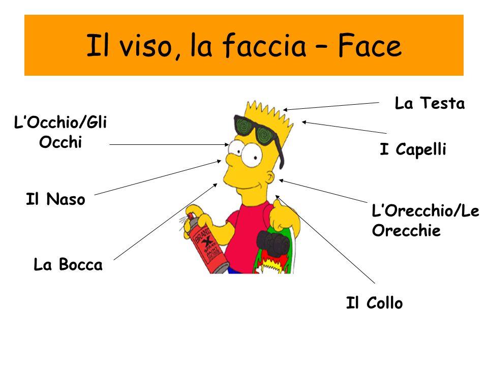 Il viso, la faccia – Face La Testa L'Occhio/Gli Occhi I Capelli