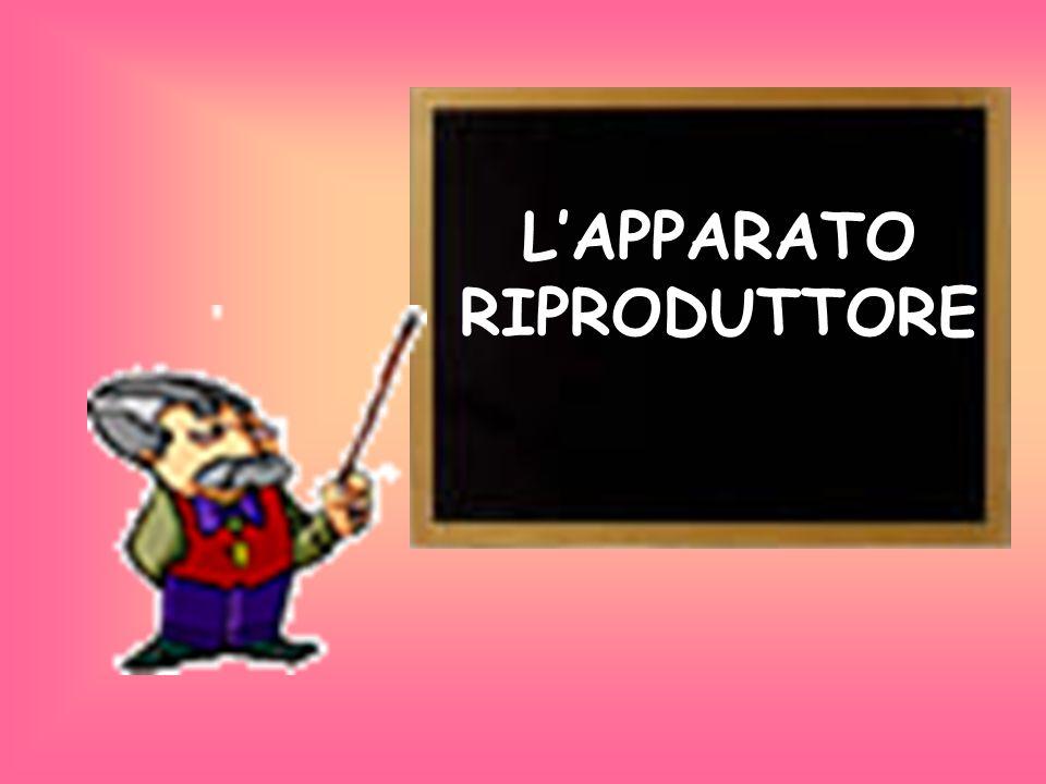 L'APPARATO RIPRODUTTORE