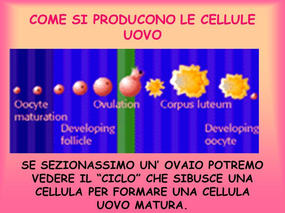COME SI PRODUCONO LE CELLULE UOVO