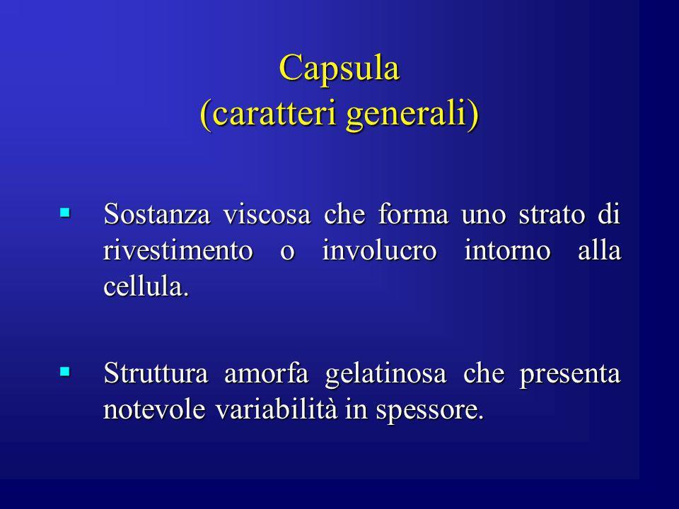 Capsula (caratteri generali)