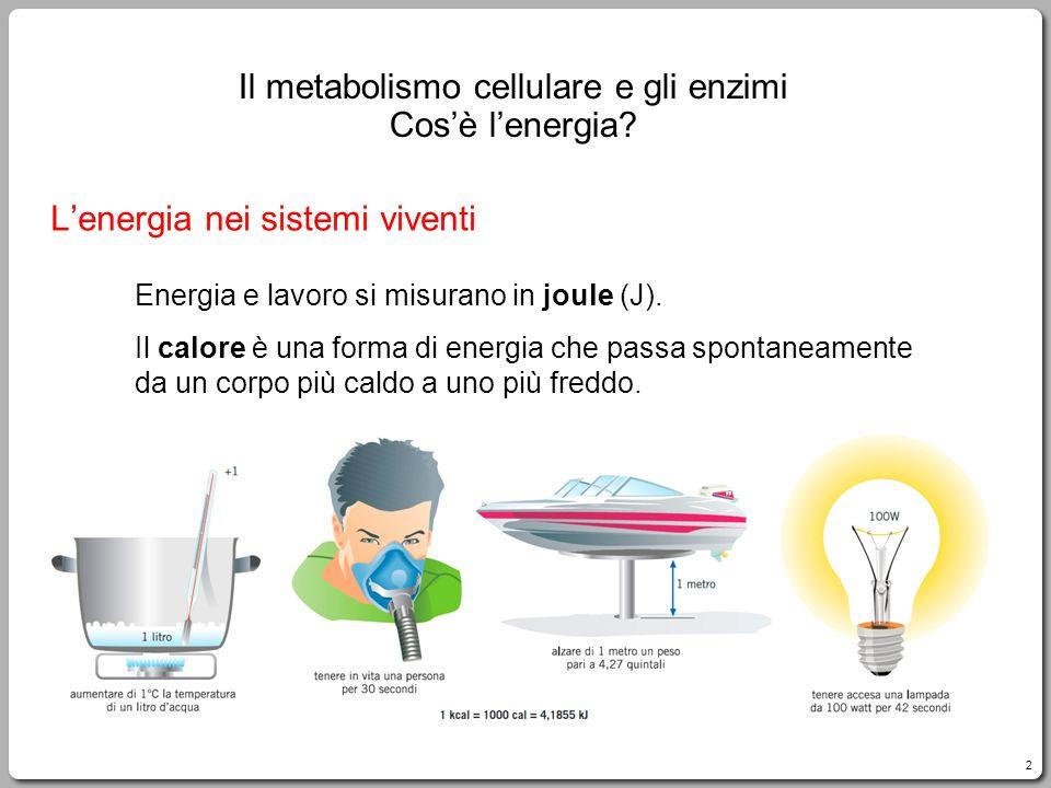 L'energia nei sistemi viventi