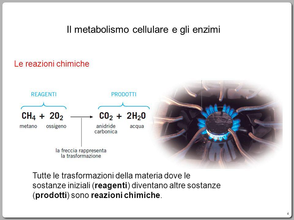 Il metabolismo cellulare e gli enzimi