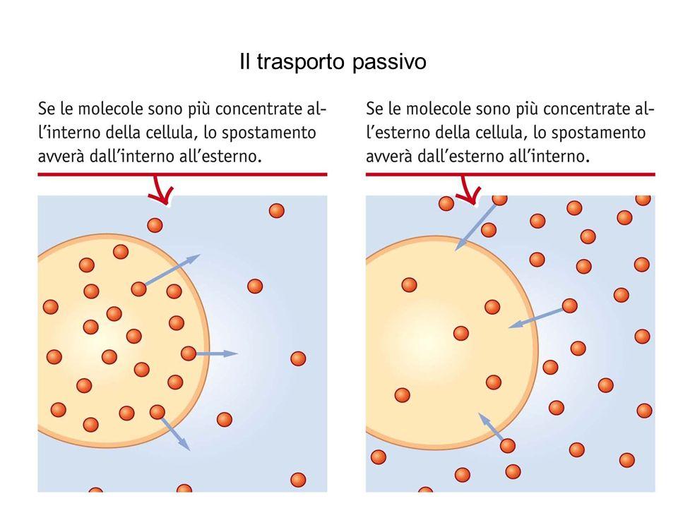 Il trasporto passivo Il processo di diffusione 8