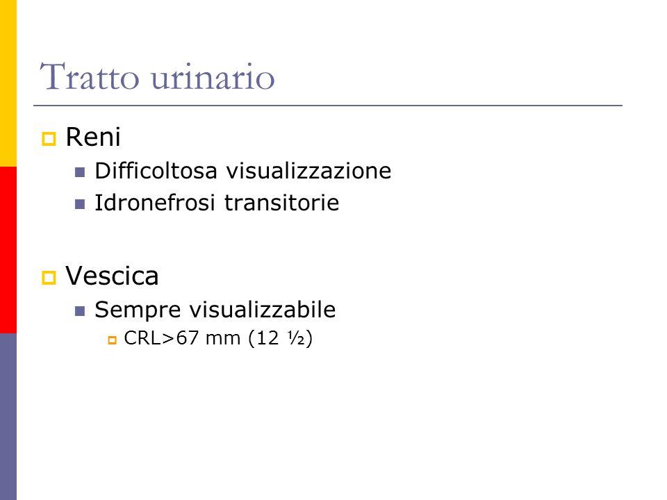 Tratto urinario Reni Vescica Difficoltosa visualizzazione