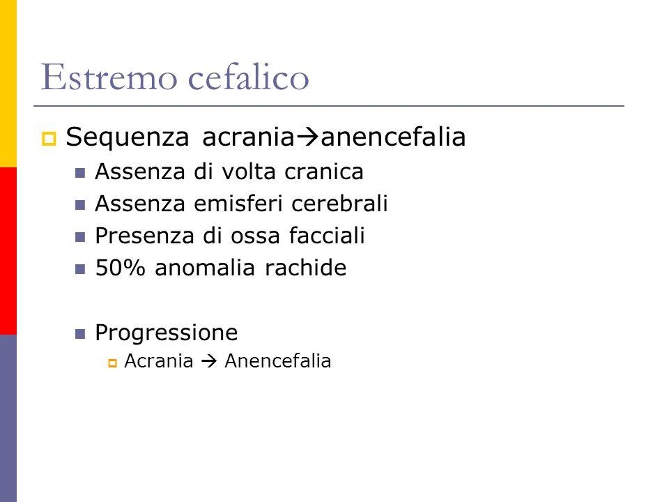 Estremo cefalico Sequenza acraniaanencefalia Assenza di volta cranica