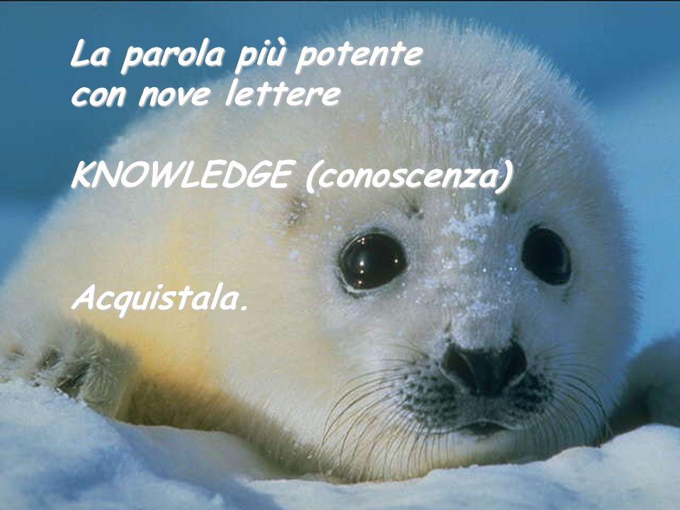 La parola più potente con nove lettere KNOWLEDGE (conoscenza)