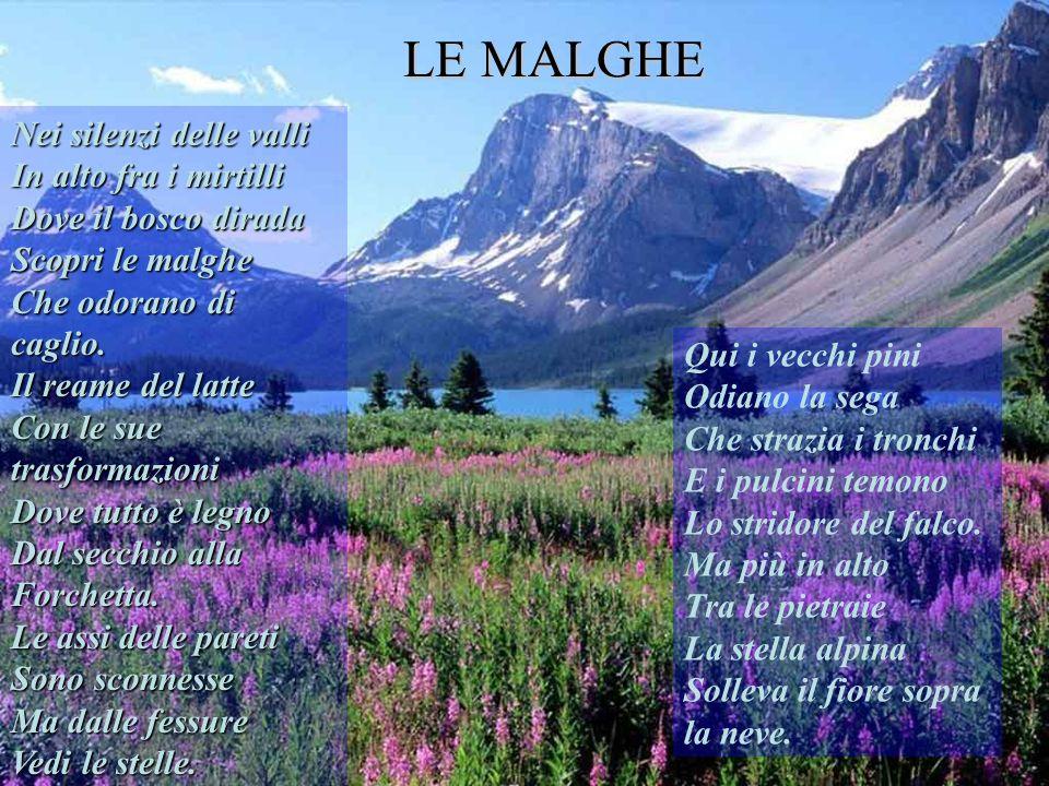 LE MALGHE Nei silenzi delle valli In alto fra i mirtilli