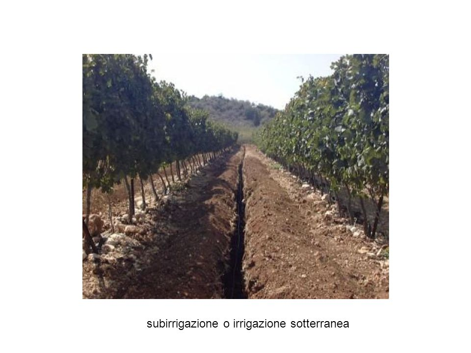 subirrigazione o irrigazione sotterranea