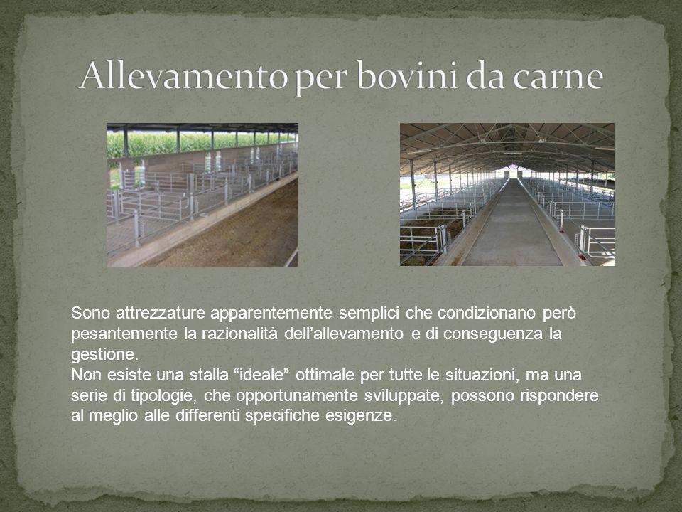 Allevamento per bovini da carne
