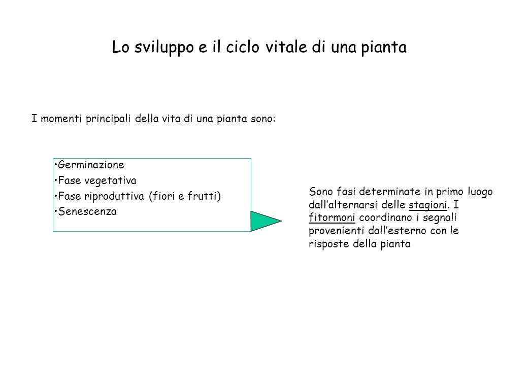 Lo sviluppo e il ciclo vitale di una pianta