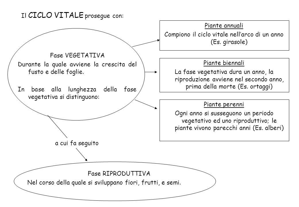 Compiono il ciclo vitale nell'arco di un anno (Es. girasole)