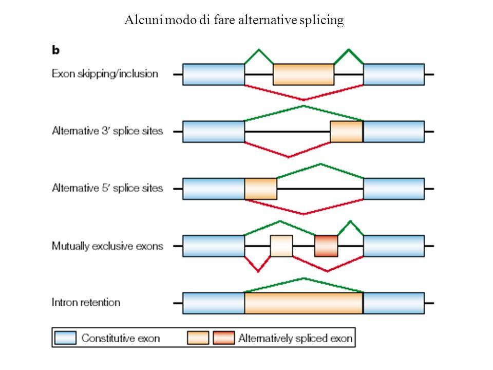 Alcuni modo di fare alternative splicing