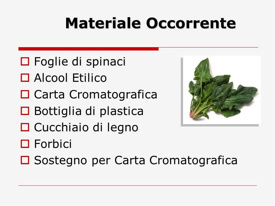 Materiale Occorrente Foglie di spinaci Alcool Etilico