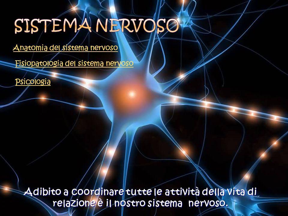 Sistema nervoso Anatomia del sistema nervoso. Fisiopatologia del sistema nervoso. Psicologia.