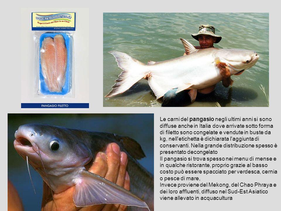 I pesci del lago maggiore ppt video online scaricare for Costo per costruire sul proprio lotto