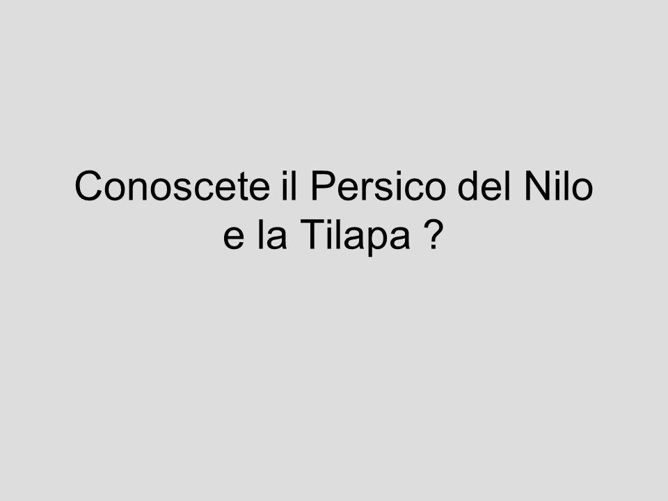 Conoscete il Persico del Nilo e la Tilapa
