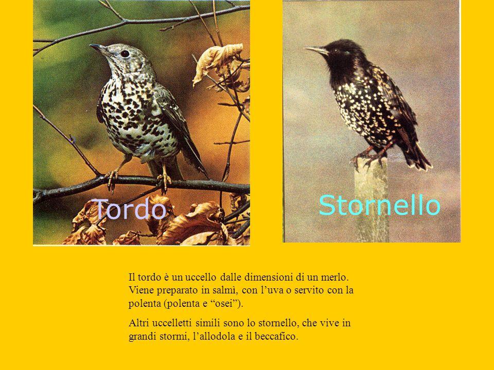 Stornello Tordo.