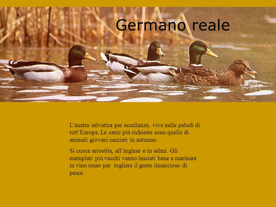 Germano reale