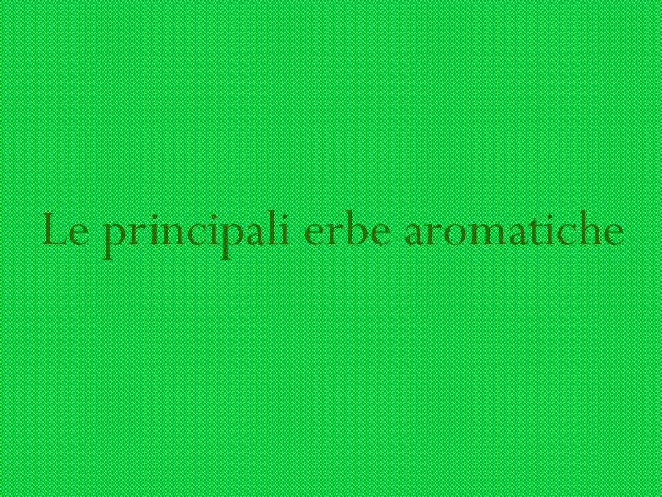 Le principali erbe aromatiche