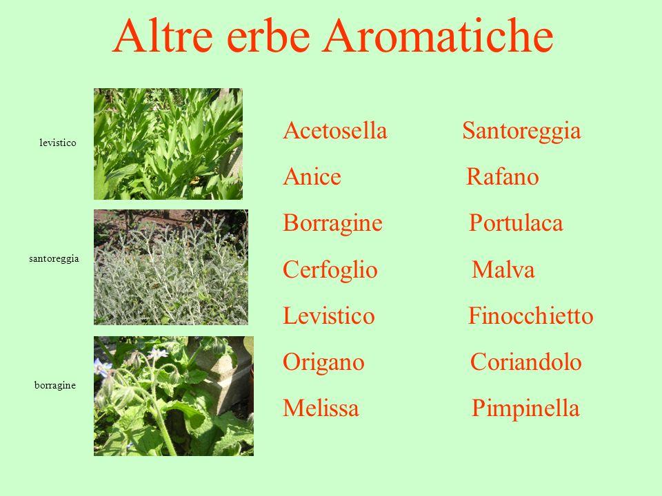 Altre erbe Aromatiche Acetosella Santoreggia Anice Rafano